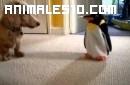 Perro luchando con un pinguino de juguete