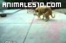 El asombro justificado de un gato