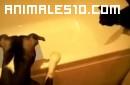 Perro tira a un gato a la bañera