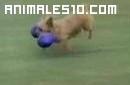 Perros locos haciendo de Reir