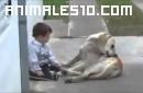 Niño con sindrome de Down y su perro cuidador