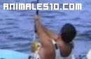 Como pescar un atún de 300 kilos