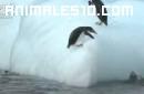 Pinguinos escalando un iceberg