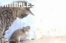 Esta rata puede de sobra con el gato