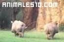 Rinocerontes de cerca
