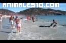 30 delfines llegan a la playa por sorpresa