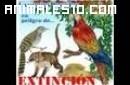 Animales en la selva peruana