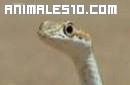 Origen de las serpientes