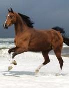 Precioso caballo marrón