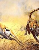 A la caza