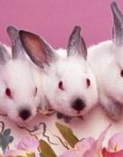 Curiosos conejos