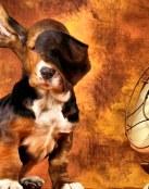Protege a tu perro del calor