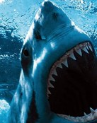 Temido tiburón