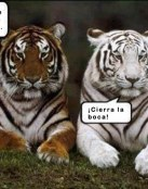 Tigre albino, tigre normal