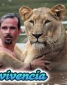 Convivencia de Tigres con el Hombre