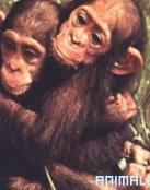 Â¿Monos como Mascota?