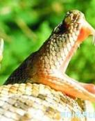 Ataque de Anaconda a un Soldado