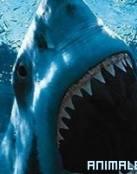 Ataque de Tiburon a Persona