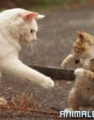El Gato boxeador