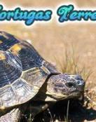 Las Tortugas de Tierra