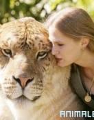 Mezcla entre Tigre y Leon