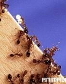 Cuanto Viven las Hormigas