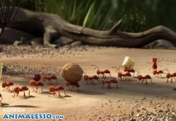 Trabajadoras hormigas