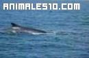 Viaje de las Ballenas