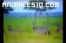 Fauna de Africa