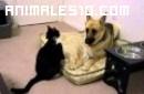 Gato loco y perro santo