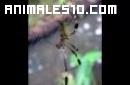 Tipos de arañas venenosas