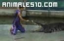 Cocodrilo ataca a su cuidador