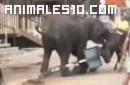 Elefantes atacan a personas