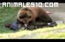Brutal ataque de oso a persona