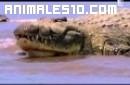 Gustave el cocodrilo