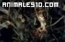 Hormigas asesinas. Parte 5