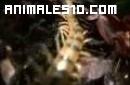 Insectos mortales. 1 de 5