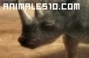 Duelo animal. Elefante contra rinoceronte.P3