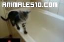 Gato contra Bañera