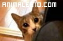 Gato jugando al escondite ingles