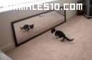Gato frente al espejo