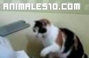 Gato contra impresora
