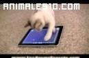 Gato jugando con un Ipad