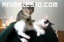 Gato dando un masaje