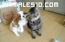 Un gato que no puede ser mas bueno