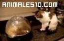 Gato asustado por unas palomitas