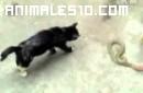 Gato contra serpiente