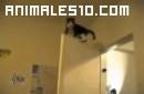 Gatos trepadores