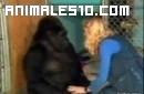 Koko el gorila cuidando de gatitos
