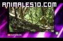El curioso Kakapoo